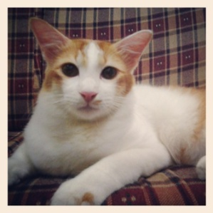 kucing manja paling comel original
